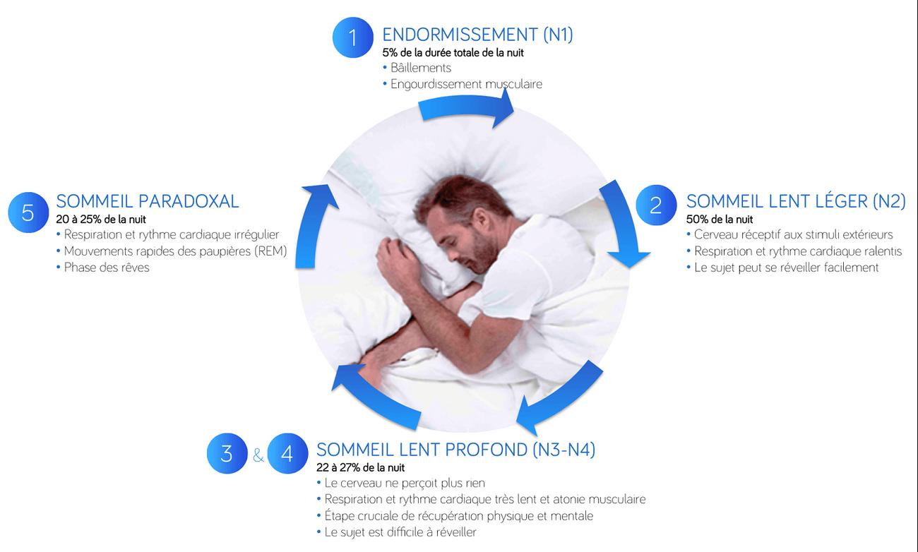 etapes du sommeil