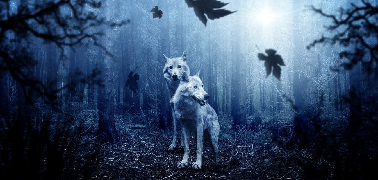 loup presage animaux